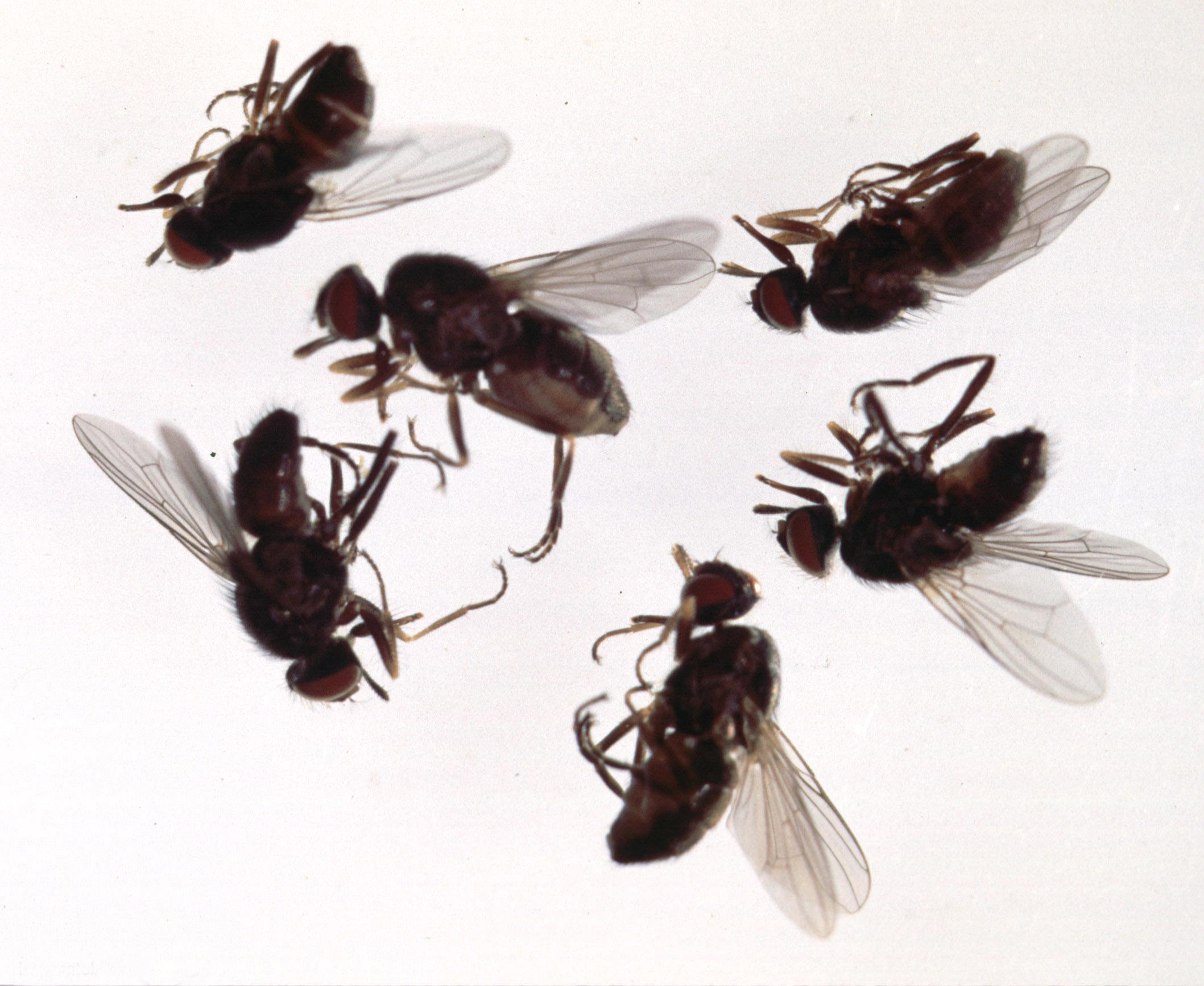 The control of flying insects   house fly. The control of flying insects   house fly     Insectox